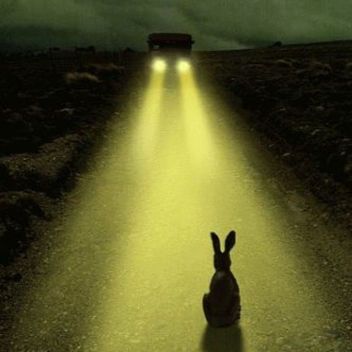 rabbit in the headlights